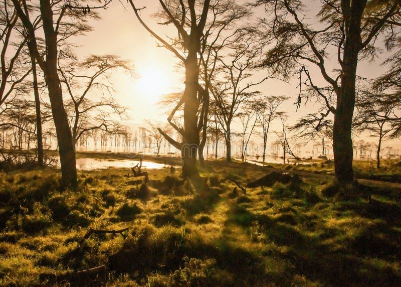 Früher Morgen des Nakuru Sees und des umgebenden Waldes, Kenia, Afrika stockfotografie