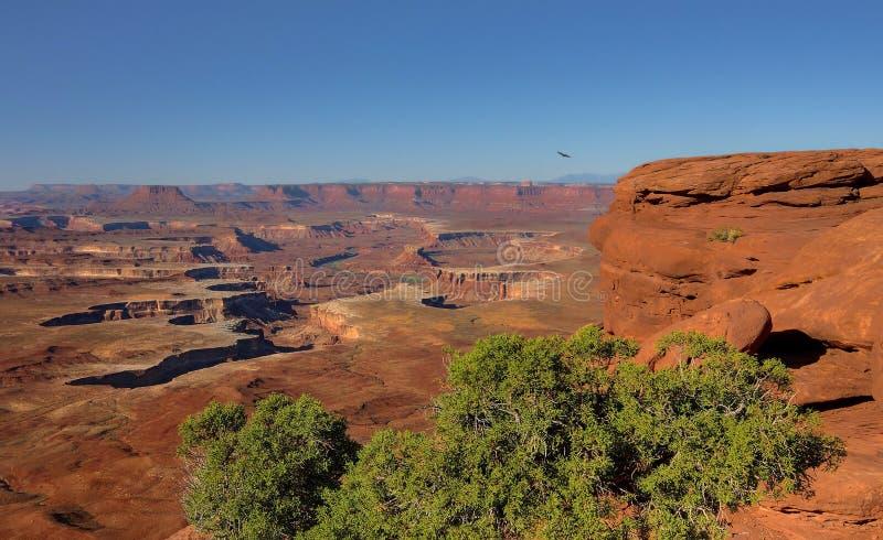 Früher Morgen-Jagd in Canyonlands stockfotos