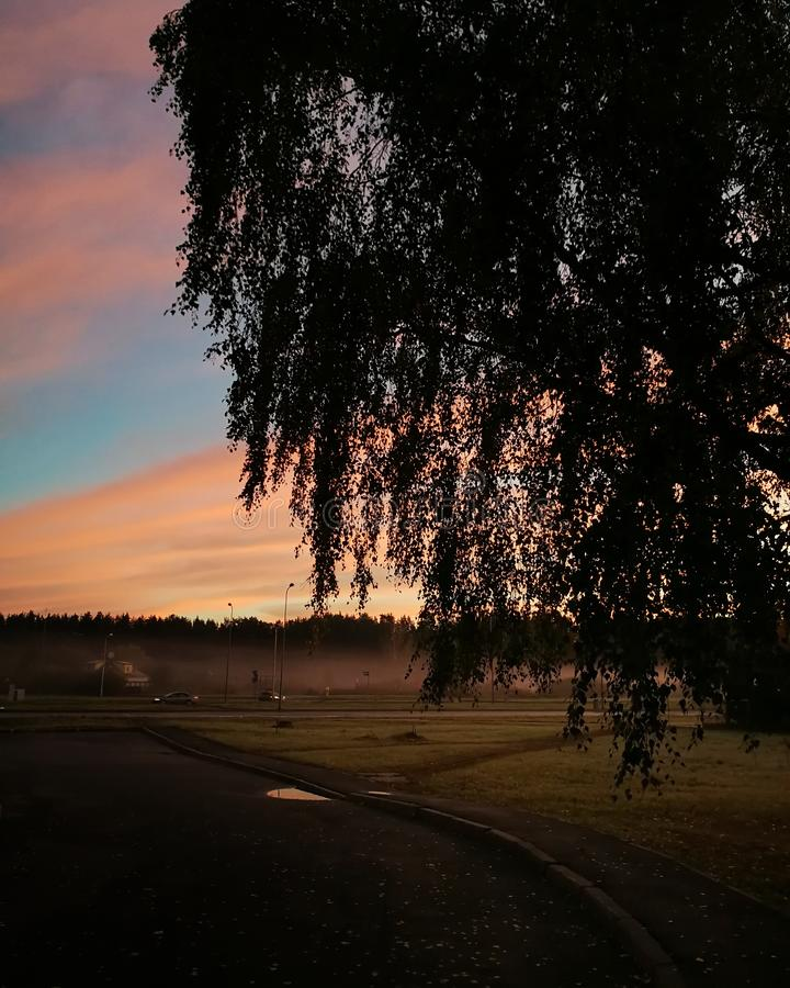 Früher nebeliger Sonnenaufgang mit Birkenschattenbild in der Front stockfotografie