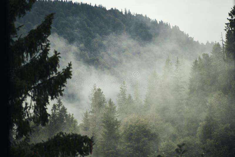 Früher Wald unter dem Nebel stockbilder