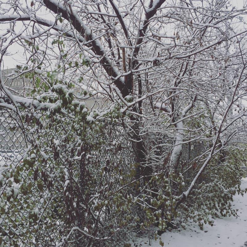 Früher Winter stockfotografie