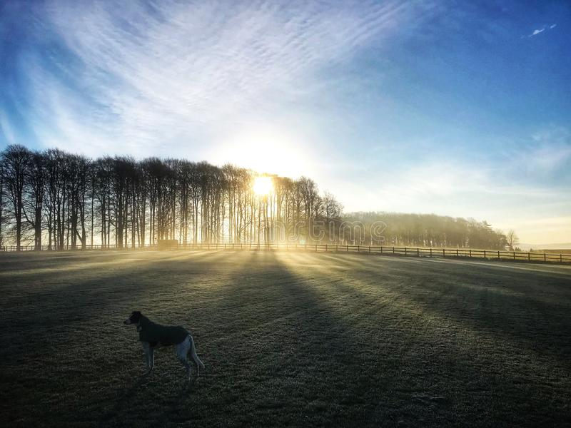 Früher Wintermorgen mit einem Hund lizenzfreie stockfotografie