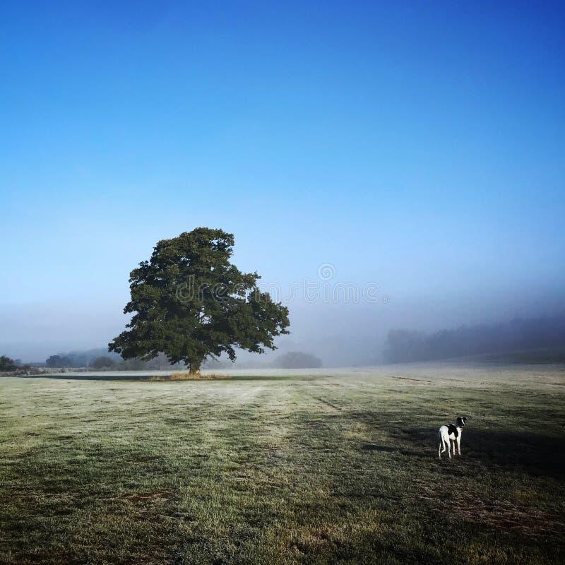 Früher Wintermorgen mit einem Hund stockfotos