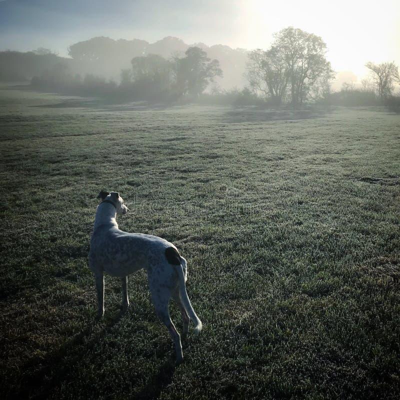 Früher Wintermorgen mit einem Hund lizenzfreie stockbilder