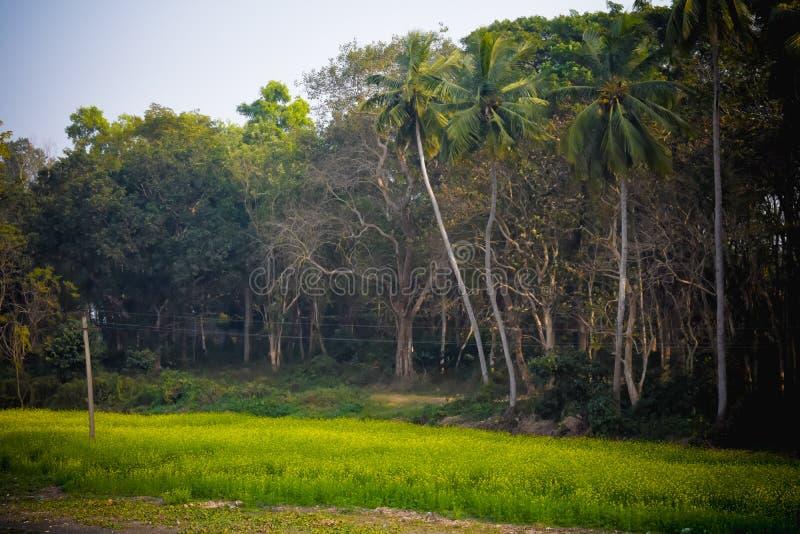Frühherbstlandschaftsmorgen, Panoramablick, einsamer windiger Kokosnussbaum und grüne Felder auf Winterzeit Ländliche Landschaft  stockfotos