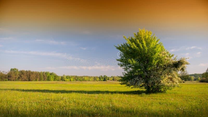 Frühjahr lizenzfreie stockfotografie