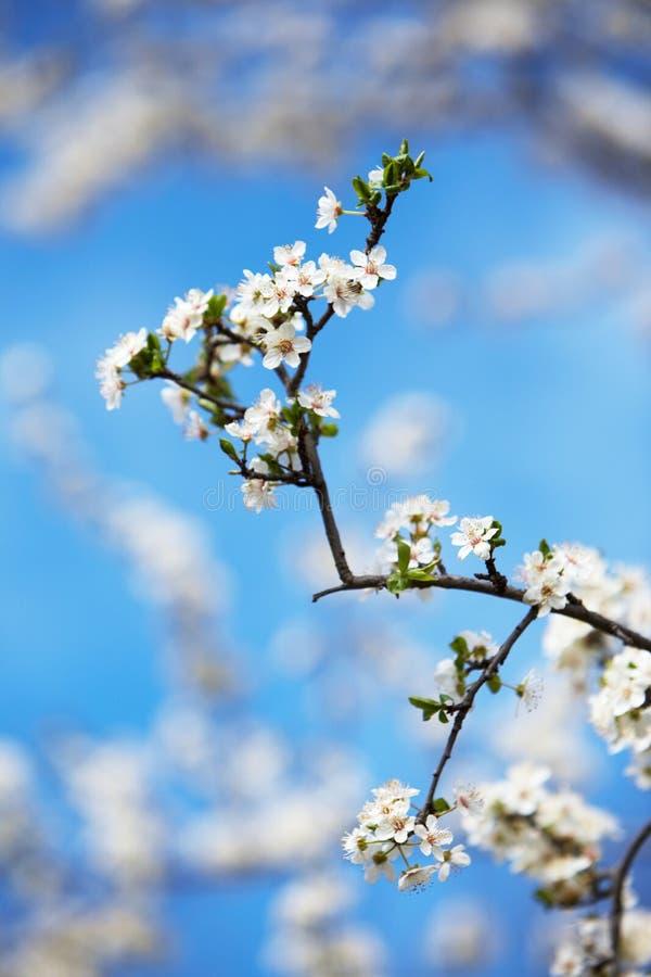 Frühjahr stockfotografie