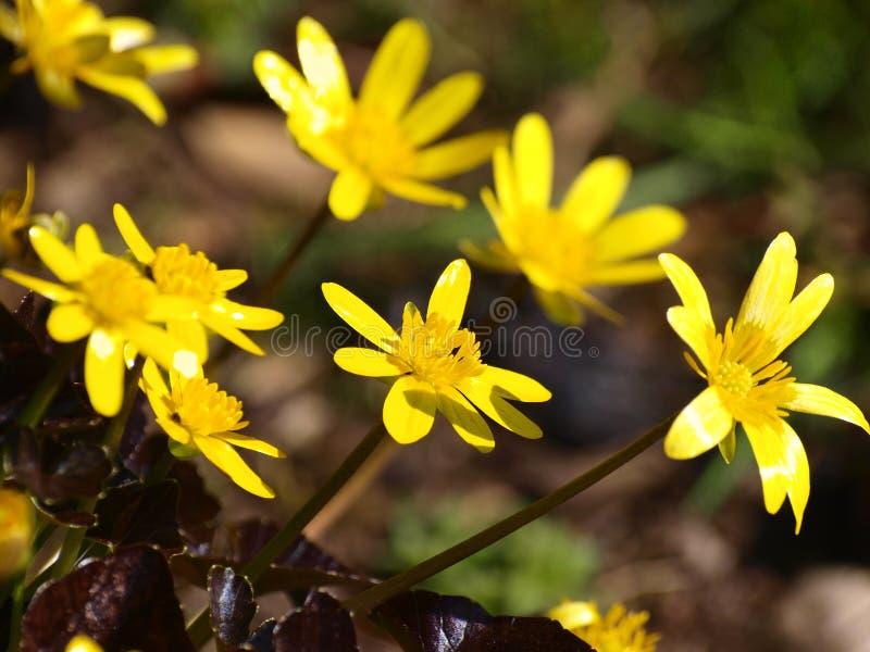 Blumen im märz  Frühjahr-Blumen stockbild. Bild von köpfe, wachsen, märz - 13986607
