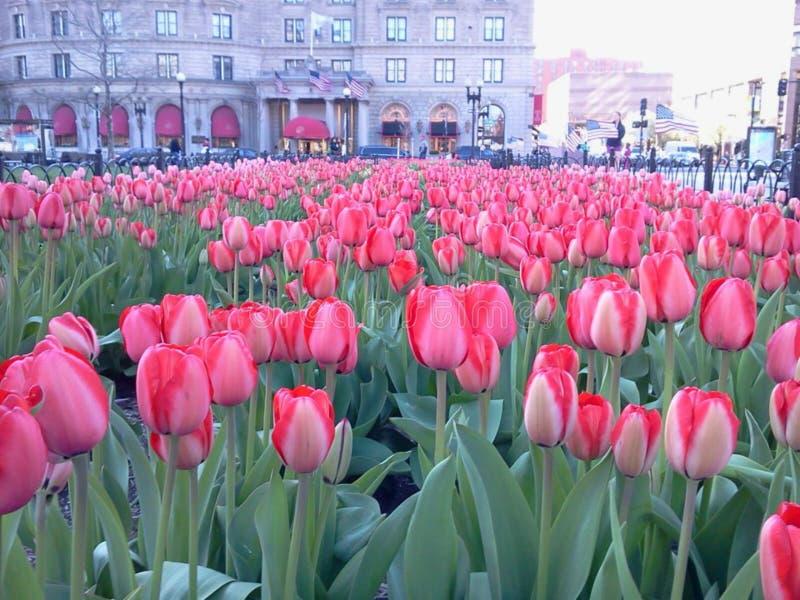Frühjahr in Boston lizenzfreie stockbilder
