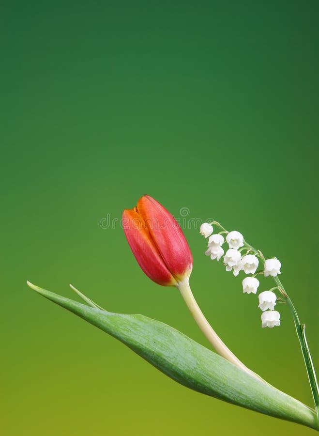 Frühjahr flowes lizenzfreies stockfoto