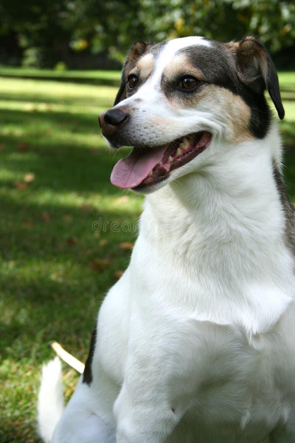 Frühjahr-Hund stockfoto