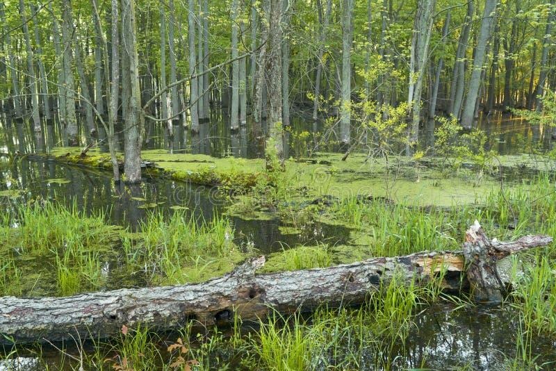 Frühjahr im Wald stockbild