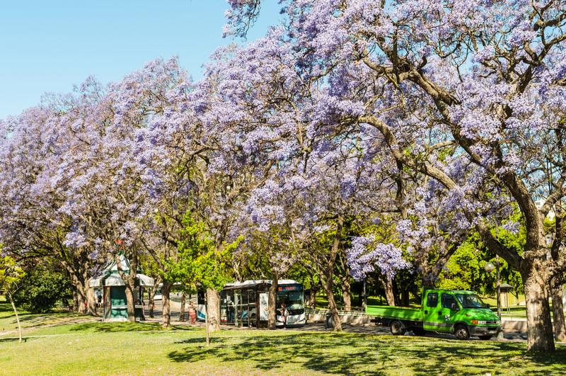 Frühjahr in Lissabon, Portugal stockbild