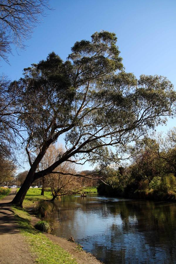 Frühjahr in Neuseeland lizenzfreie stockfotos