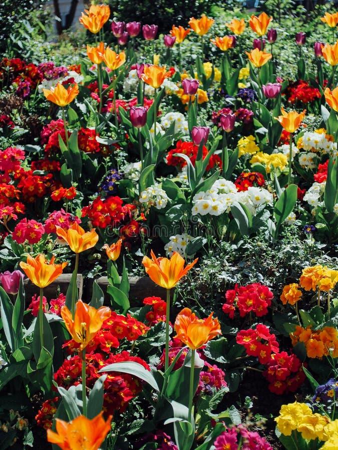 Frühjahr in Paris stockbild
