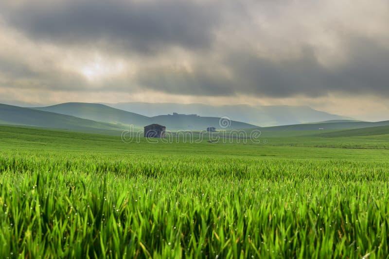 frühjahr Zwischen Apulien und Basilikata Hügelige Landschaft mit dem Maisfeld unreif, vorgeherrscht durch Wolken Italien lizenzfreies stockbild