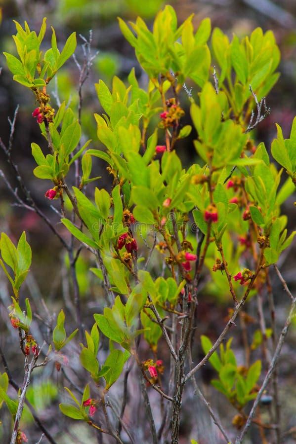 Frühjahrblumenbild lizenzfreies stockfoto