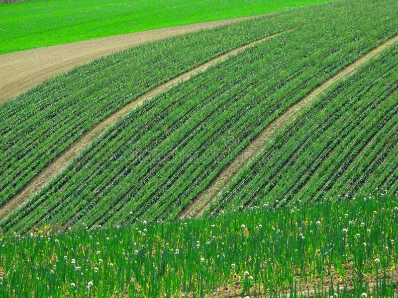 Frühjahrfelder lizenzfreies stockbild