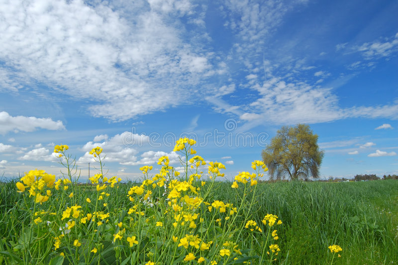 Frühjahrlandschaft stockbild