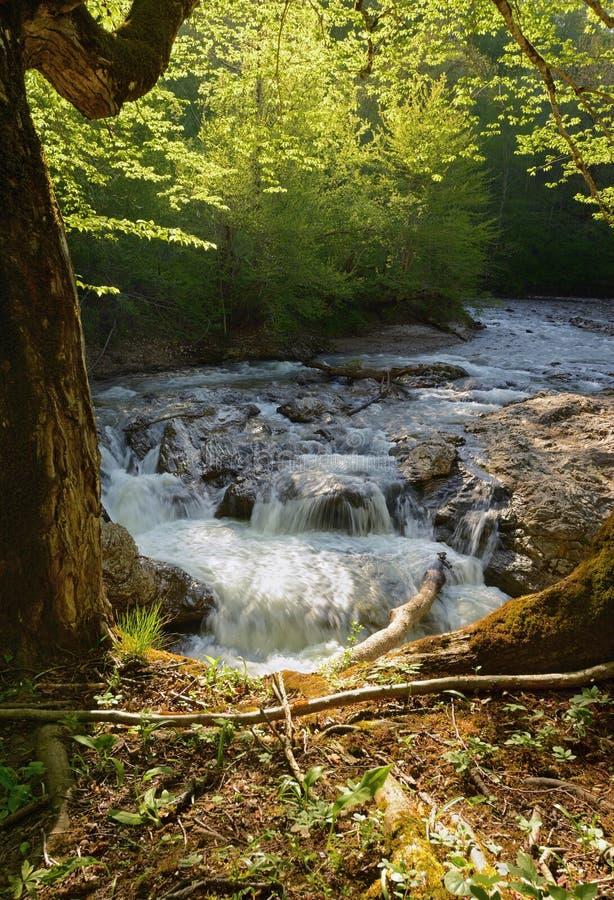 Frühjahrlandschaft von Gebirgsfluss mit kleinem Wasserfall über Felsen stockbild