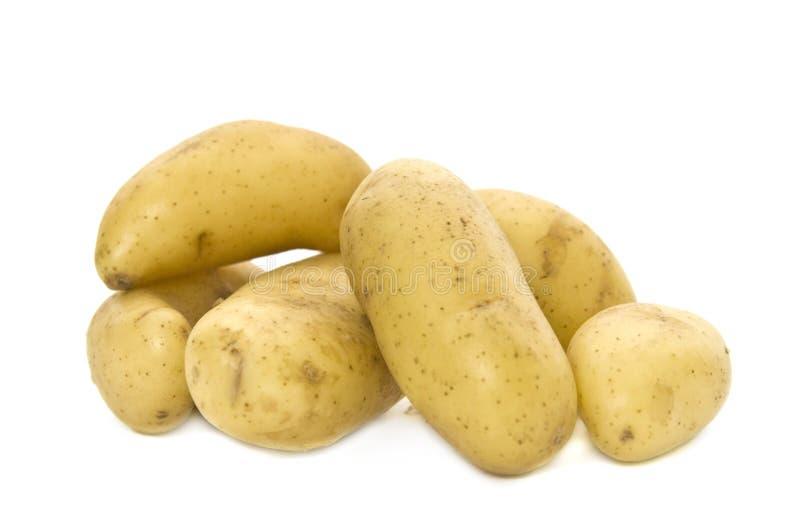 Frühkartoffeln stockbilder