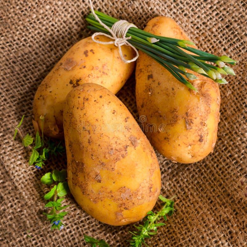 Frühkartoffeln lizenzfreie stockbilder