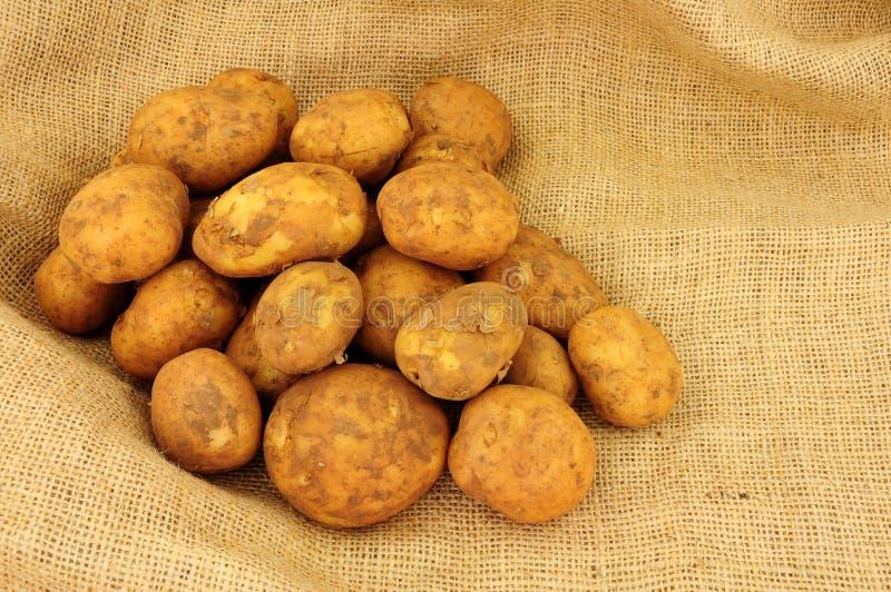 Frühkartoffeln auf einem Rausschmisshintergrund des groben Sackzeugs lizenzfreies stockbild