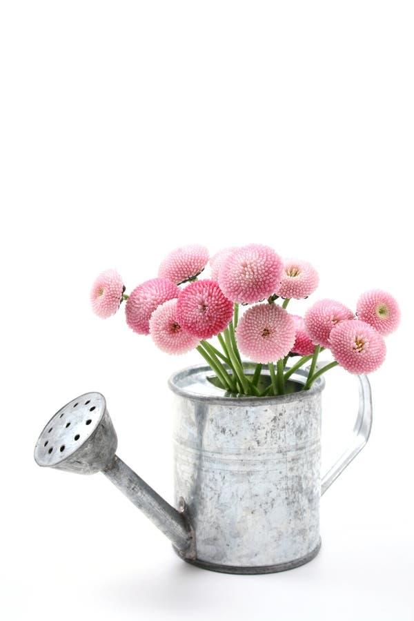 Frühling! lizenzfreies stockbild