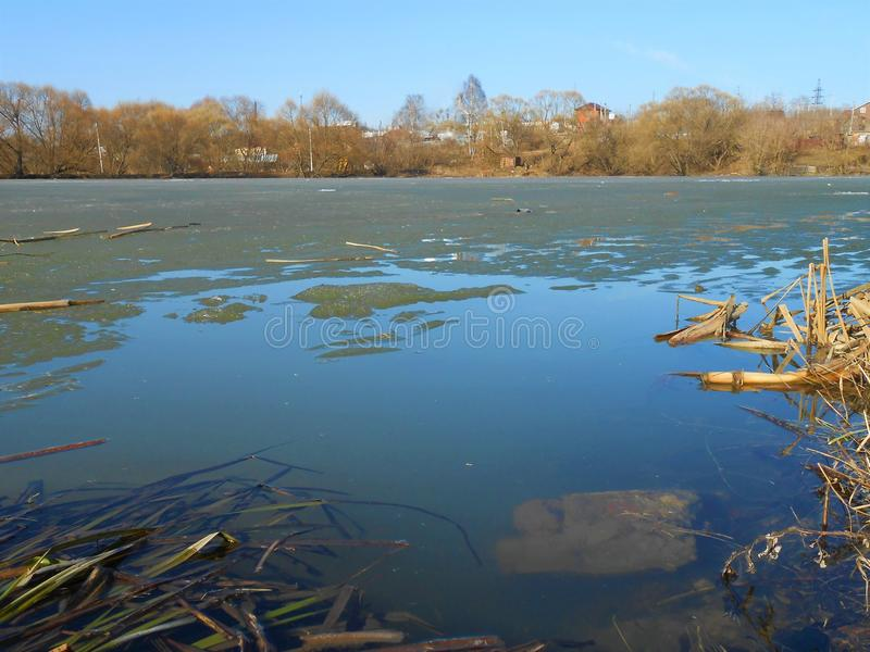 Frühling auf dem Teich stockfoto