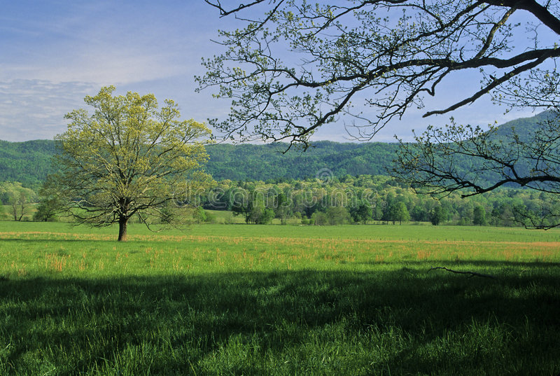Frühling, Bäume, Felder stockfotos