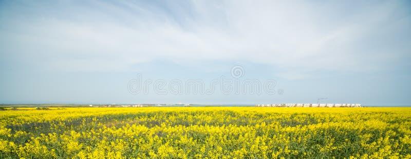 Frühling Blühende Vergewaltigung, Bulgarien lizenzfreie stockbilder