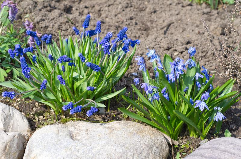 Frühling blüht Blüte im Garten lizenzfreie stockbilder