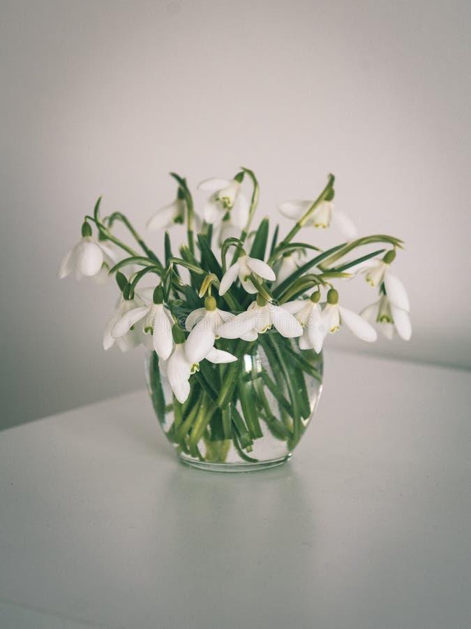 Frühling blüht in einem Vase auf Leuchtpult im Reinraum - Weinlese lizenzfreie stockbilder