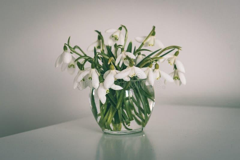 Frühling blüht in einem Vase auf Leuchtpult im Reinraum - Weinlese stockbild