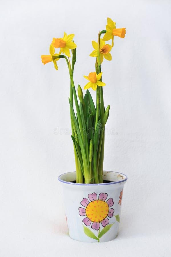 Frühling blüht in einem weißen Topf - Garten lizenzfreie stockfotos
