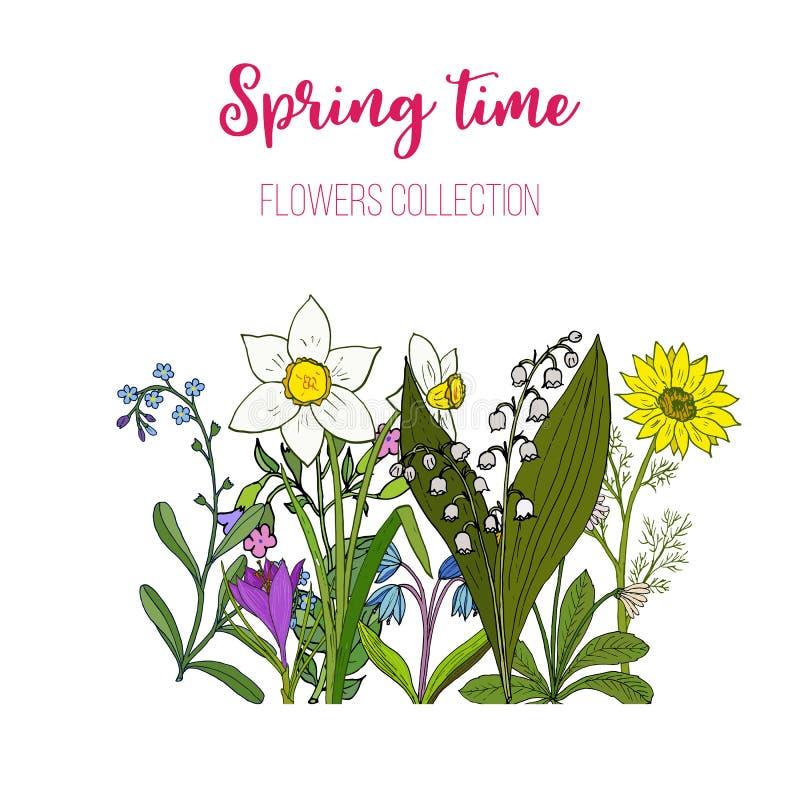 Frühling blüht Krokus, scilla, adoni stock abbildung