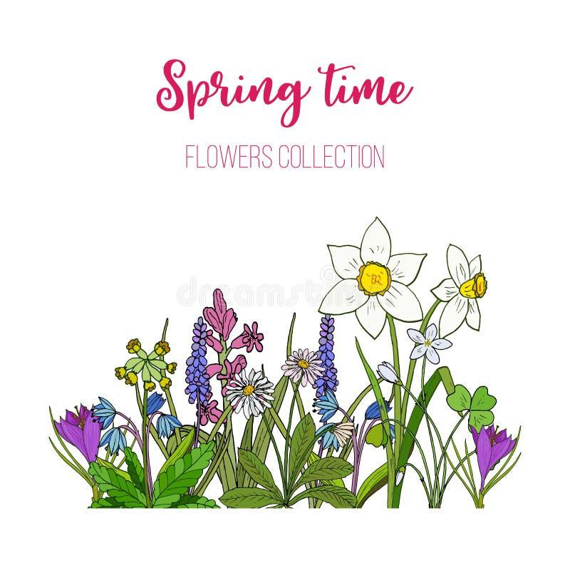 Frühling blüht Krokus, scilla, Primel stock abbildung