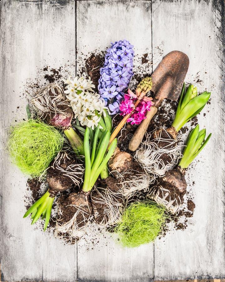 Frühling blüht Potting mit der Hyazinthe, Birnen, Knollen, Schaufel und Boden und verfasst lizenzfreie stockfotos