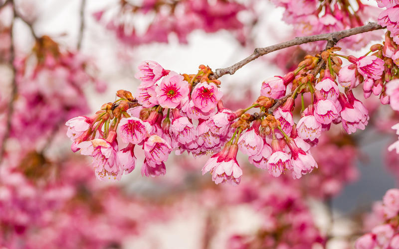 Frühling Reihe