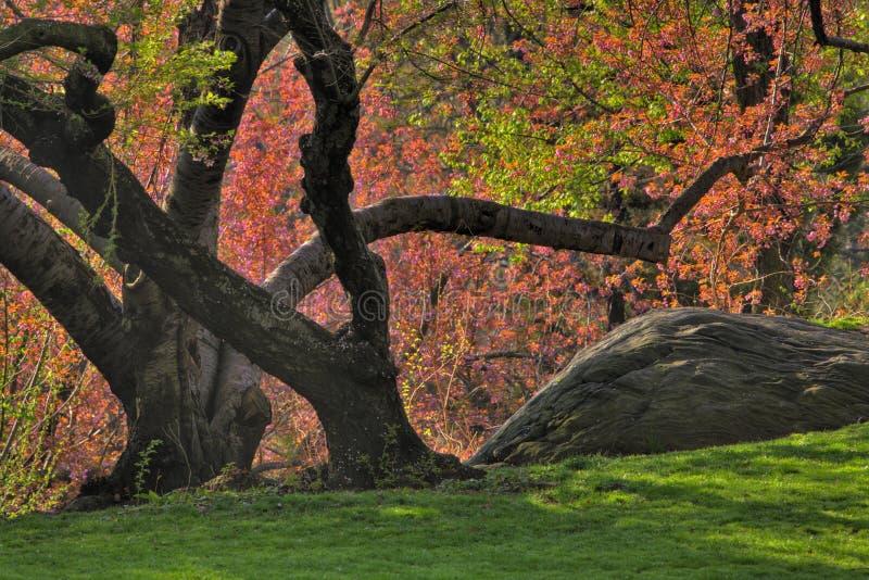 Frühling in Central Park stockbild