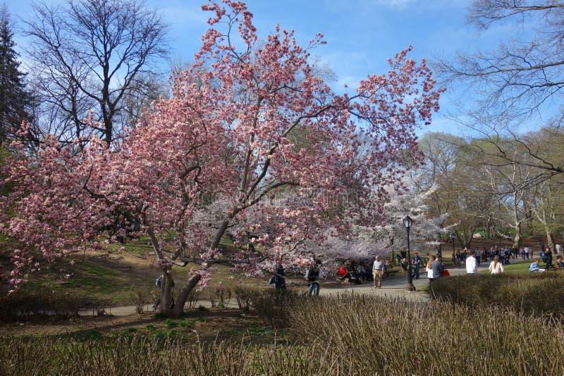 Frühling in Central Park lizenzfreie stockfotos