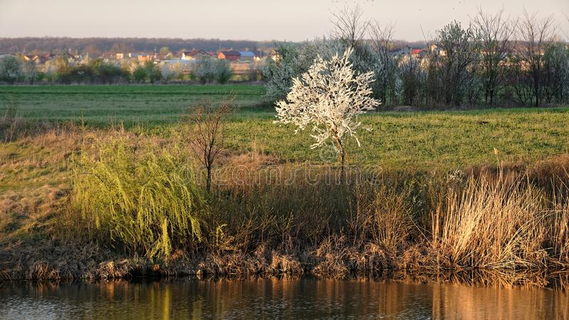 Frühling, Corbeanca, der Bezirk Ilfov, Rumänien stockfoto