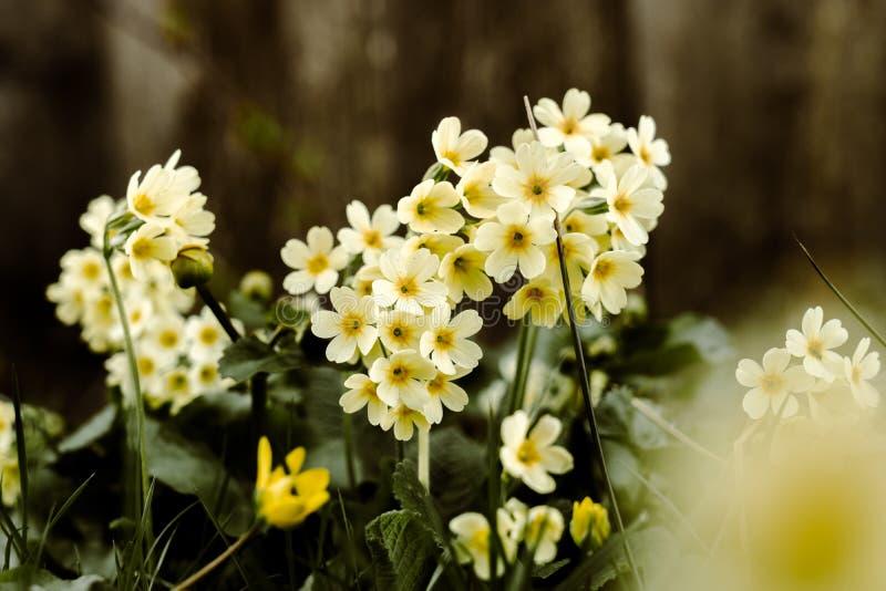 Frühling, der Blumen weckt lizenzfreies stockfoto