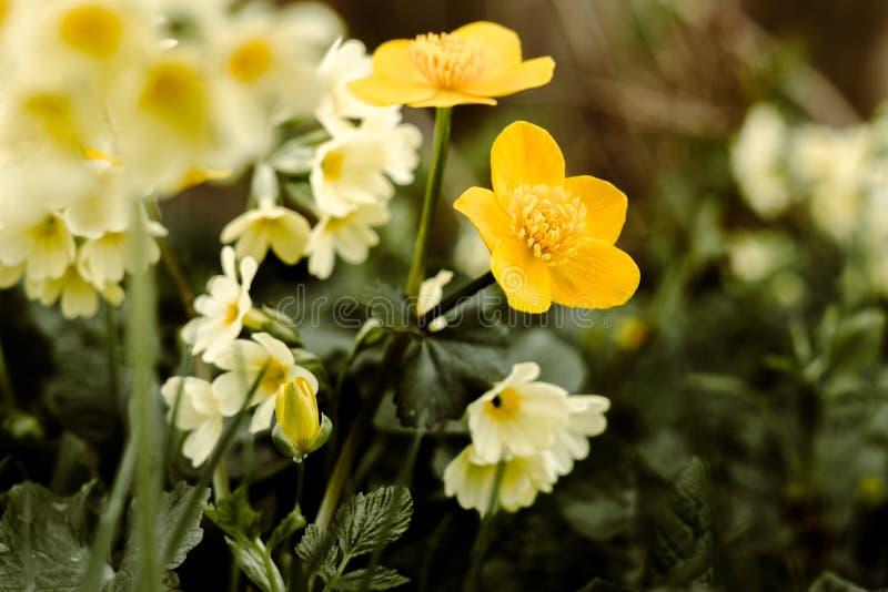 Frühling, der Blumen weckt stockfotos