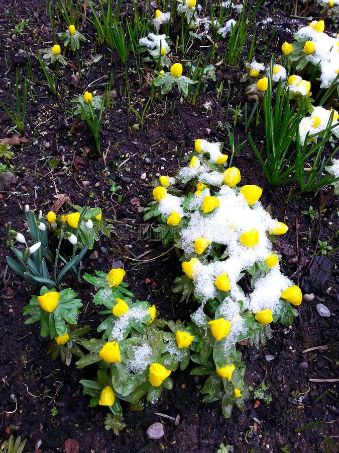 Frühling, der im nördlichen Teil von Deutschland weckt lizenzfreies stockbild