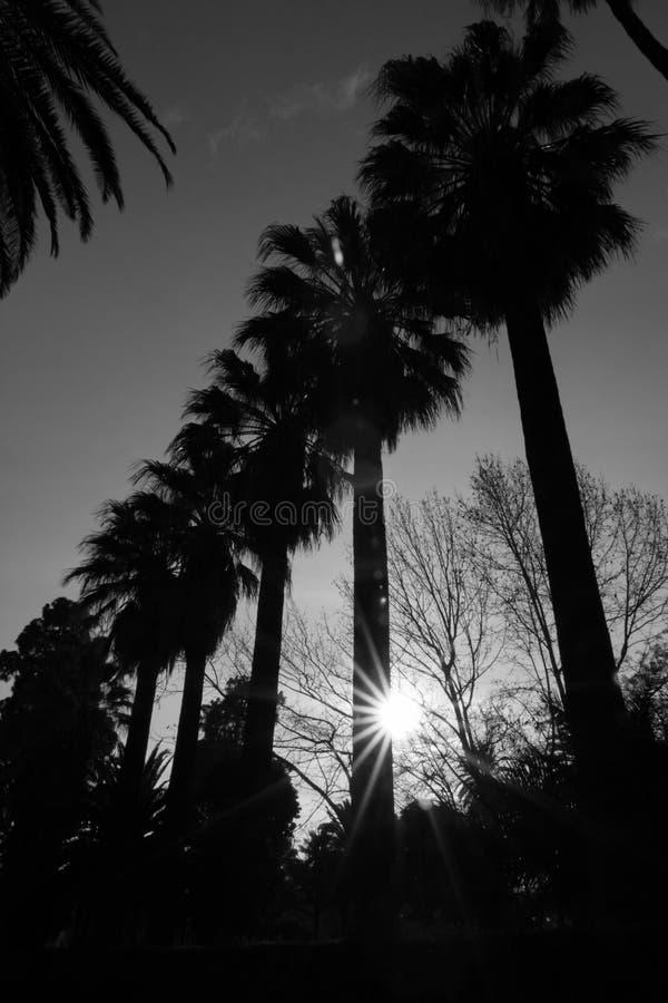 Frühling, der Sun-Beugung zwischen Palmen glättet stockbild