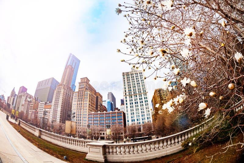 Frühling, der zu Chicago-Stadt, -baum und -gebäuden kommt stockbilder