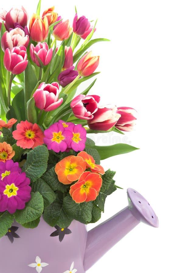 Frühling in einer Dose lizenzfreie stockbilder