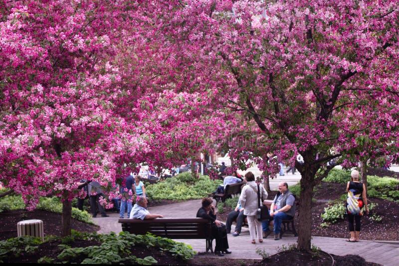 Frühling in einer Stadt. stockfotografie