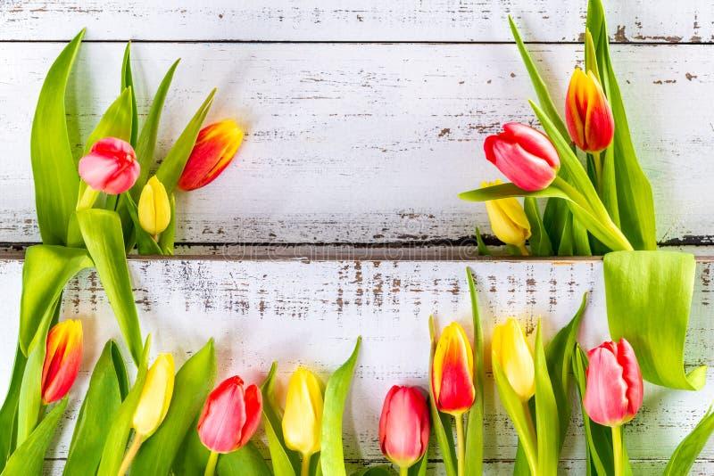 Frühling färbte Tulpen vereinbart zwischen weißen rustikalen Planken stockfotos
